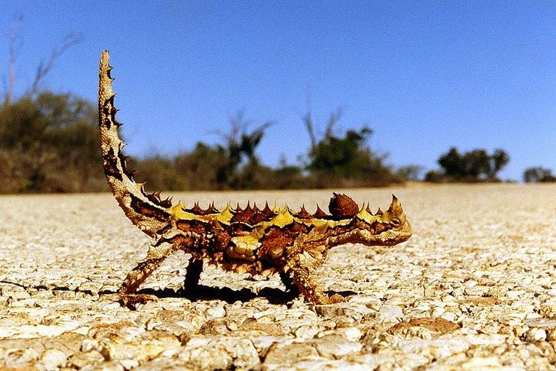 اغرب الحيوانات على وجه الارض