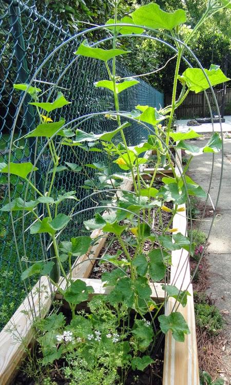 cheap garden trellis ideas photograph cheap and easy