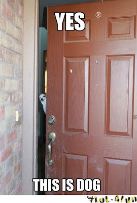 Funny house dog open the door