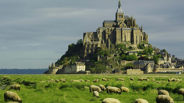 Sheep At The Foot Of Mont Saint Michel HD Wallpaper