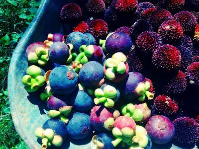 Musim Buah-buahan Di Kampung