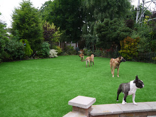 Dogs on their new HT Indulgence lawn