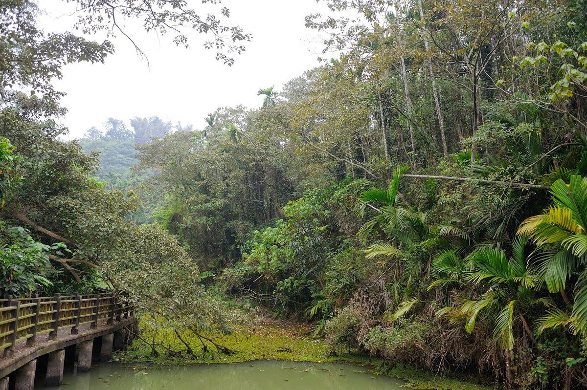 20130226-3勘查嘉義中埔深坑 檳榔園自然復育成次生林