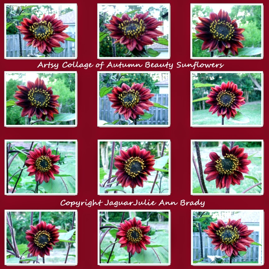 artsy autumn beauty sunflower collage on merlot