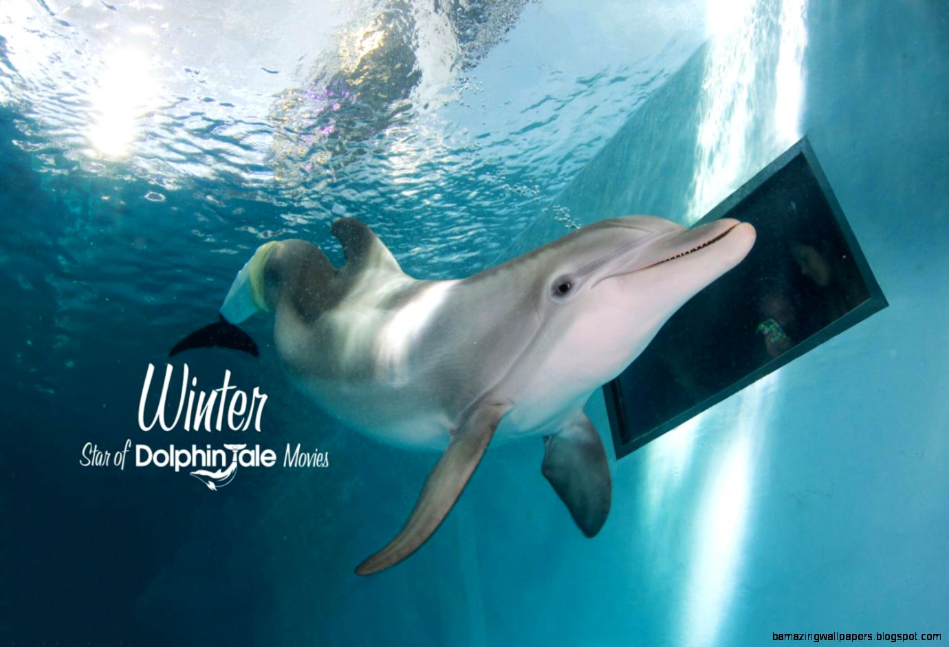 Winter the Dolphin Experience in Clearwater Beach