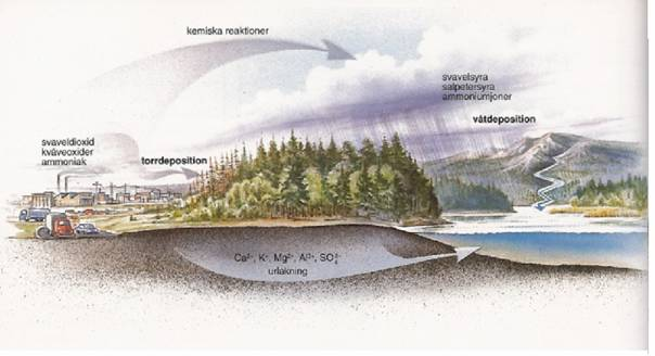försurning av mark