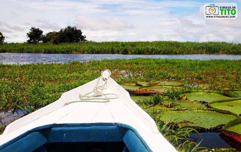 Barco e Vitórias-régias (Victoria amazonica) em área alagada de ilha localiza em Santarém, no Pará, na Amazônia