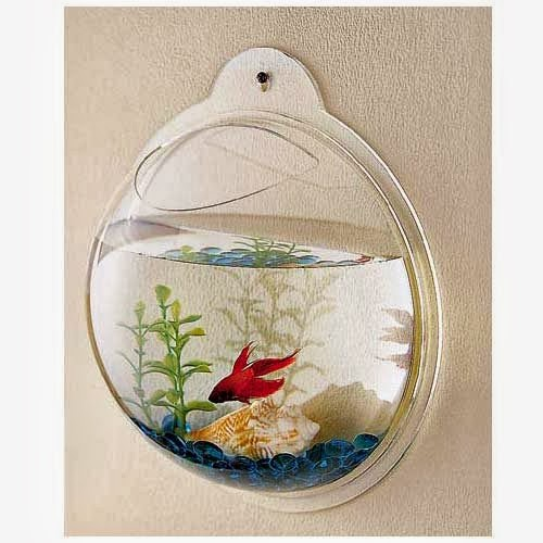 Different types of aquariums different types of aquarium for Different types of pet fish