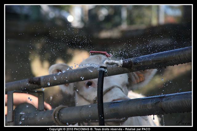 eau fuyant d'un robinet à la foire Commerciale et Agricole de Sedan