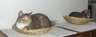 Koty w muszelkach