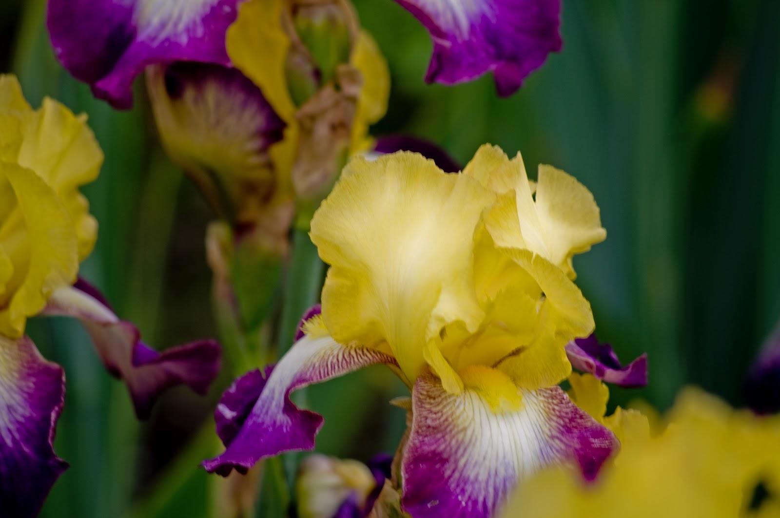 Thom Zehrfeld Photography Schreiner 39 S Iris Gardens Two