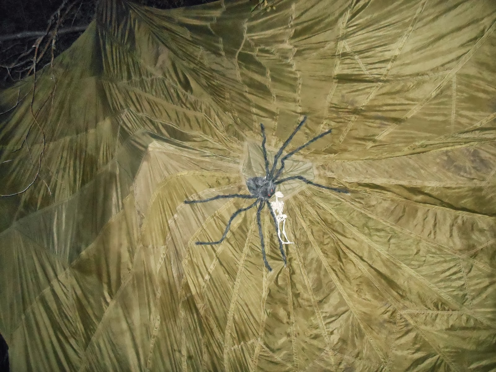 Real life giants spider - photo#19