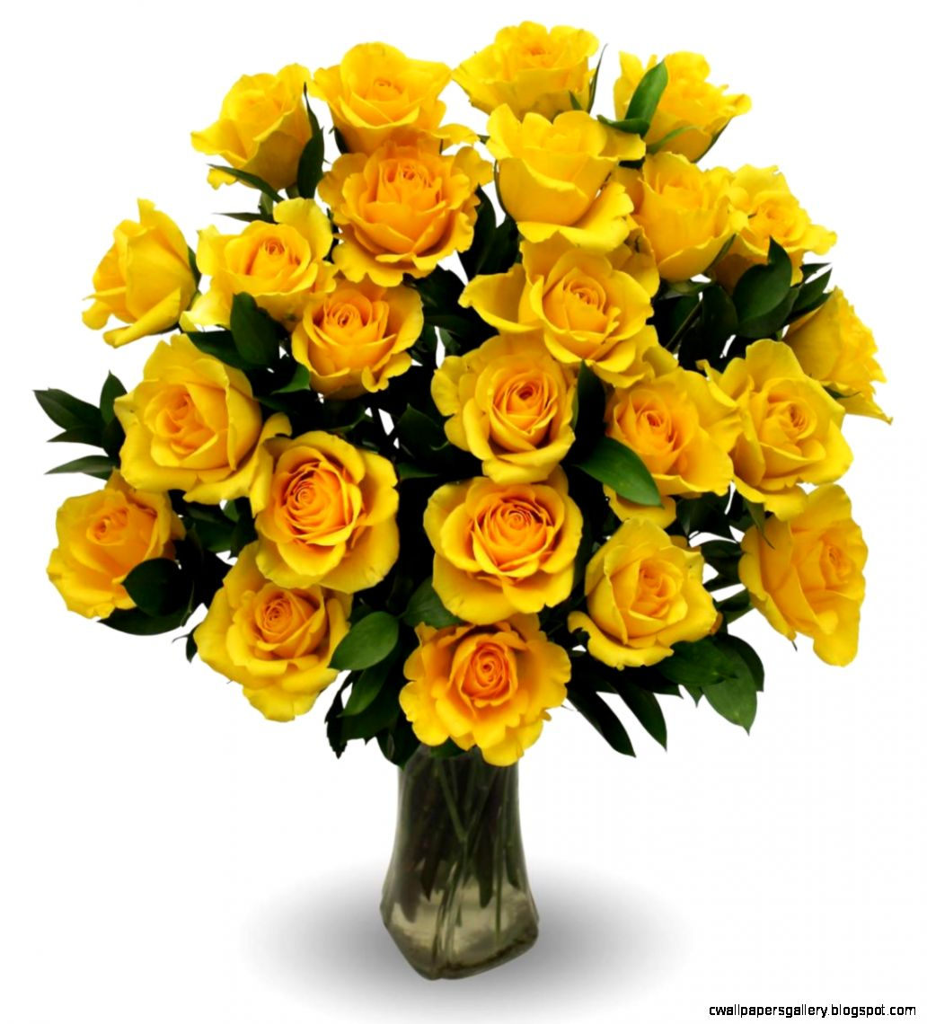 Yellow Roses   Two Dozen  Avas Flowers