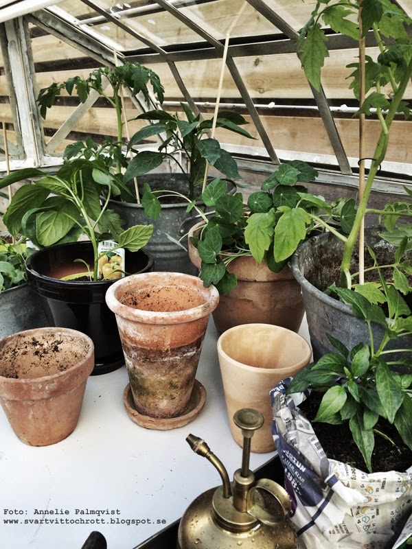 växthus, trädgård, uteplats, trädäck, inredning, inredningsblogg, växter, grönsaker, vitt, paprika, sallad, tomater, gurka, papperskruka, krukor, terracotta,