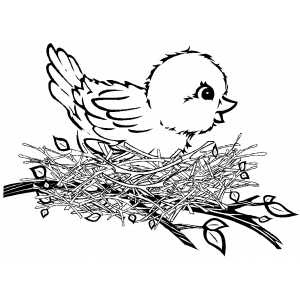 Cute Baby Birds Coloring Pages