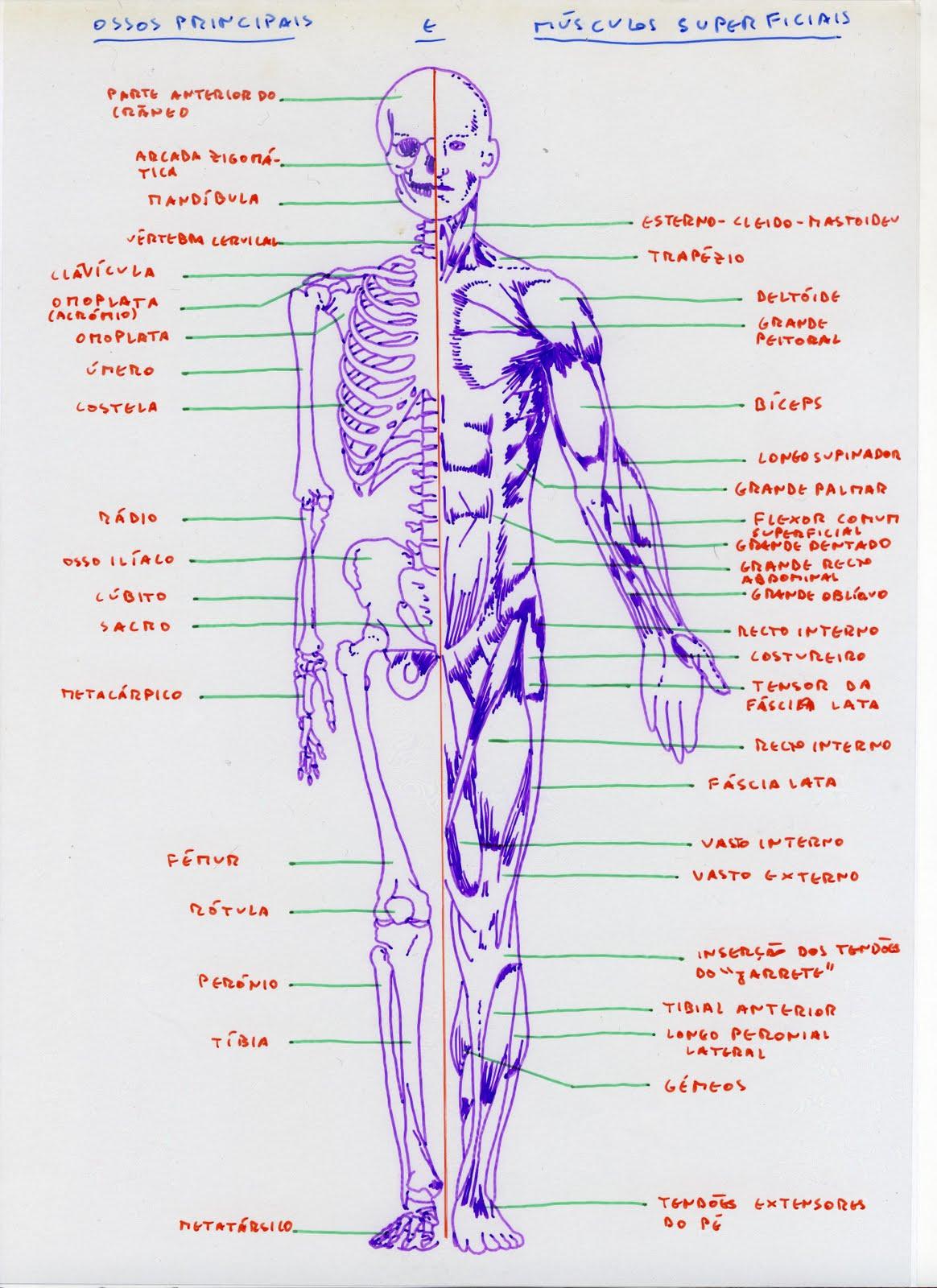 Influência de remoção de uma glândula de tireóide em uma potência