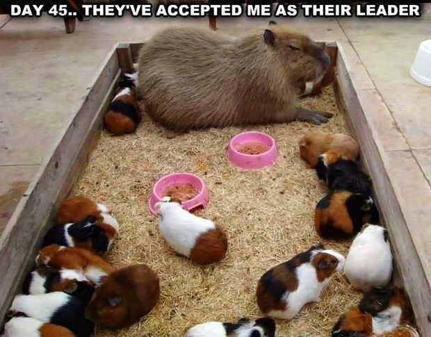30 Funny animal captions, animal pictures with sayings, captioned animal pictures