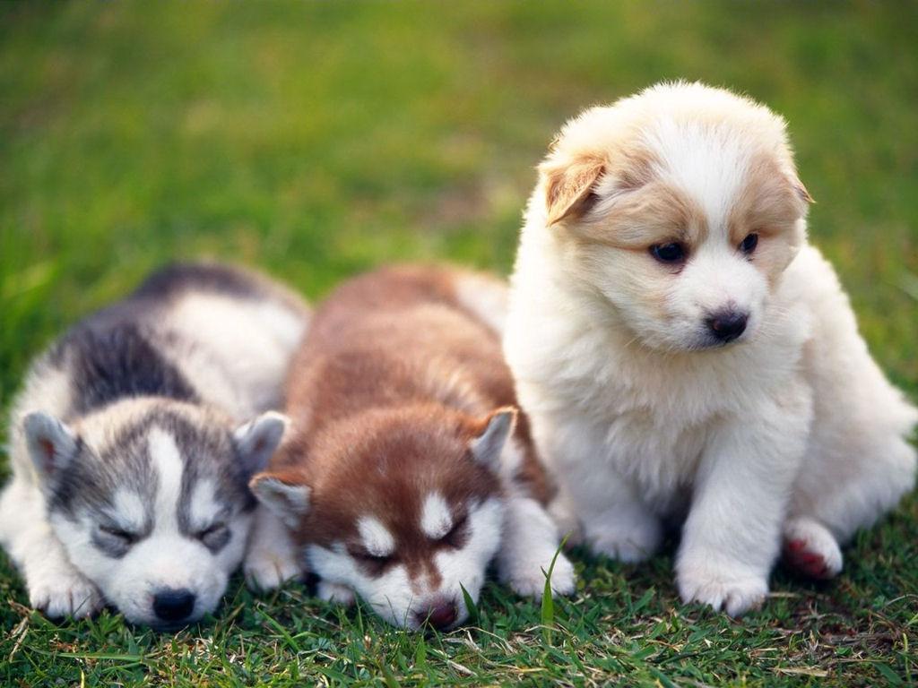 Funny puppy pi.