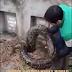 (VIDEO)Kubur Wanita Tiba-tiba Meletup.....Ular Besar Tunggu Masa Telan Jenazah