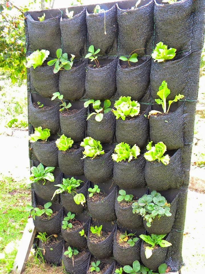 Quintais imortais huertas verticales for Bioguia jardines