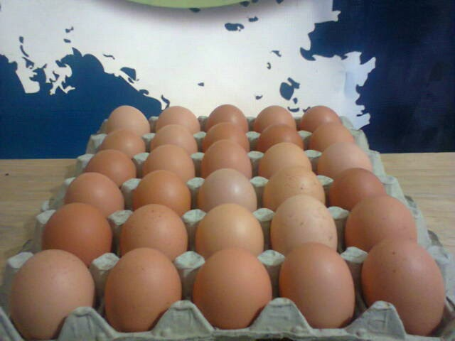 CAOBA FARMS ORGANIC EGGS!!!