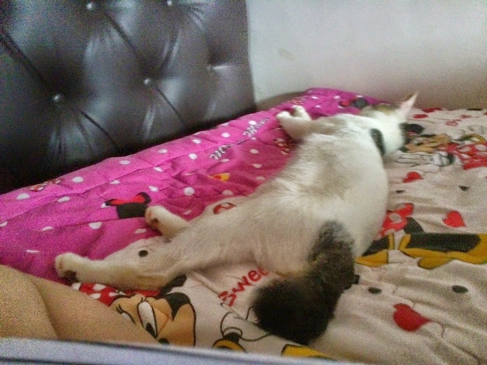 Cat Sleeping Positions Meanings