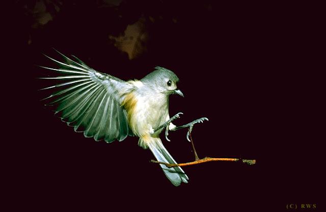 நான் பார்த்து ரசித்த புகைப்படங்கள் சில.... - Page 2 Flying+Birds+%25282%2529