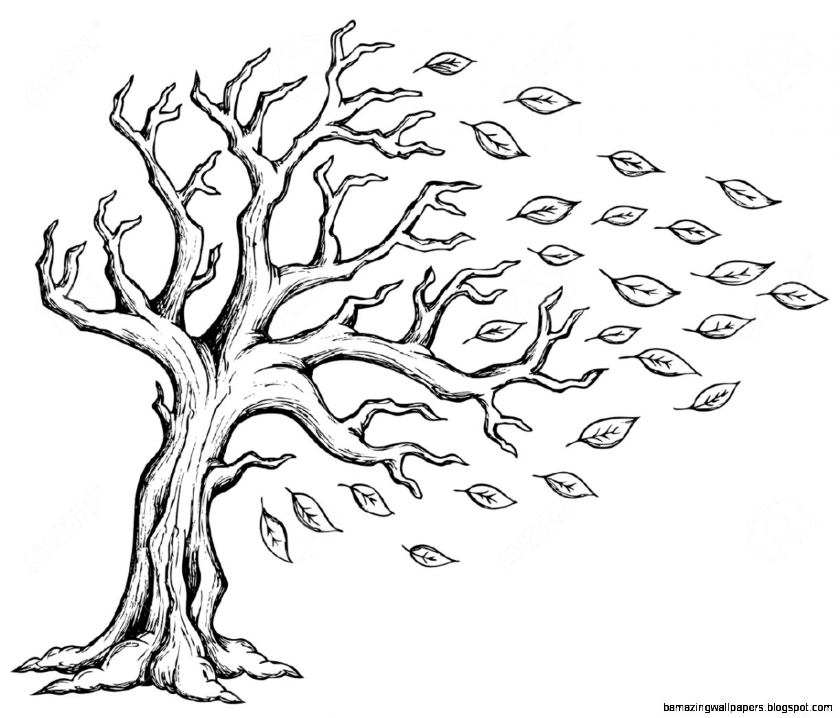 Tree drawings Drawing trees and Drawings on Pinterest