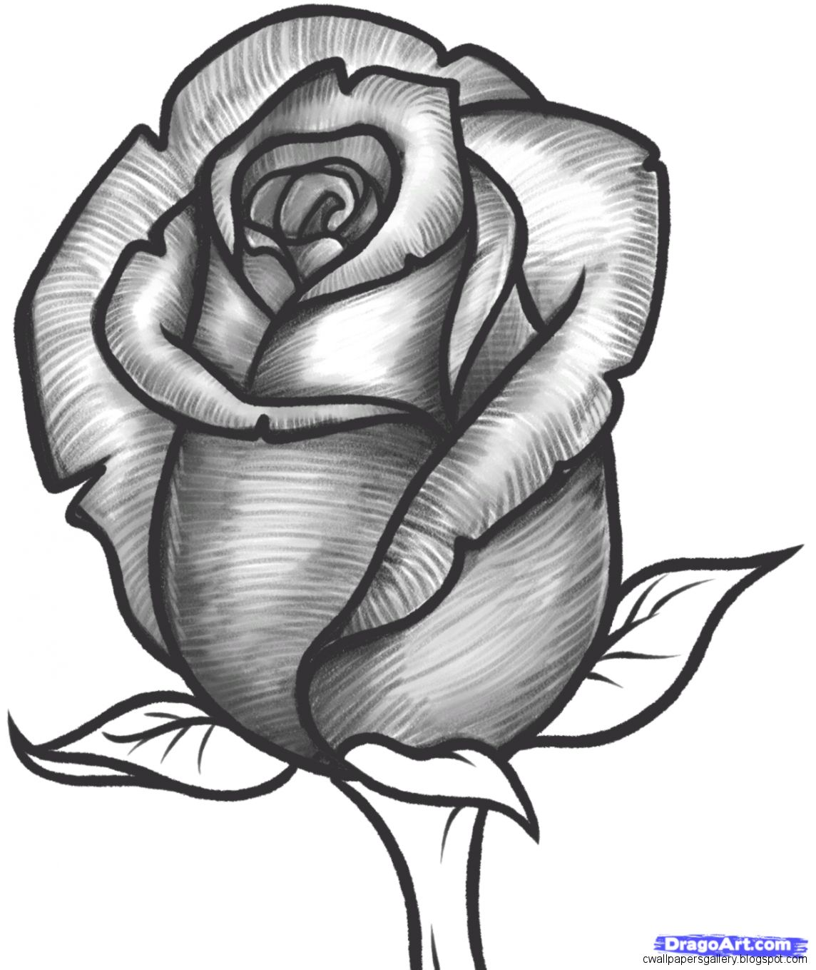 Step by step tutorial of drawing a rose using colored pencils with