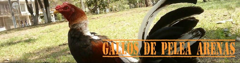 Gallos de Pelea Arenas