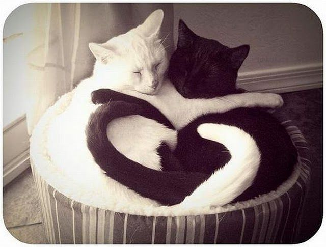 Black And White Cat Love