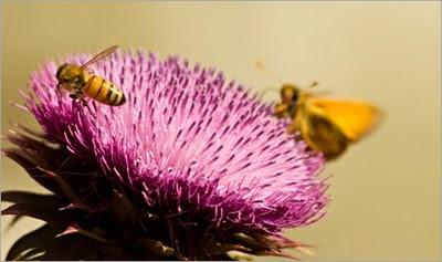 Lebah dan Kupu-kupu