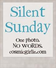 http://www.cosmicgirlie.com/2015/04/26/silent-sunday-108/