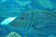 Labels: 2011, Aquarium, Atlantis, Dubai, Travel (dsc )