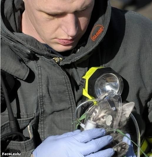 21 Foto Yang Harus Anda Lihat Setelah 21 Mei 2011 Berlalu - 10. Seorang petugas pemadam kebakaran memberikan oksigen kepada seekor anak kucing