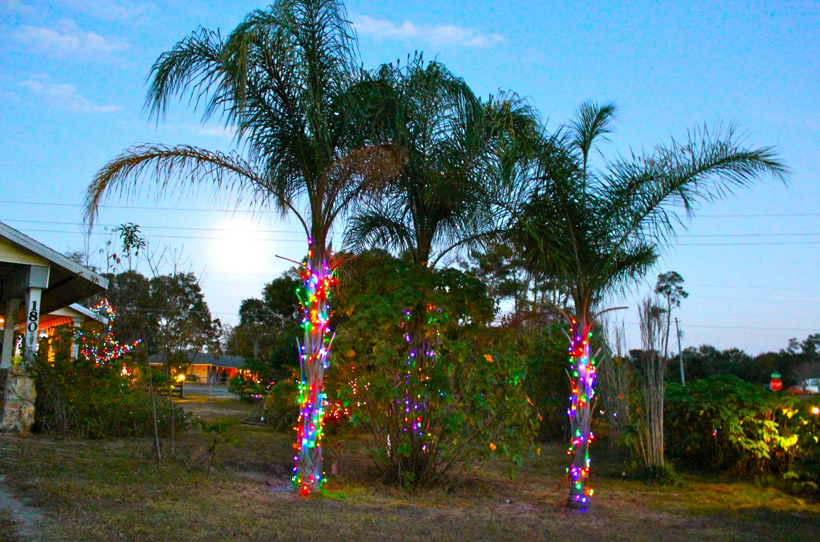 christmas lights in palm trees