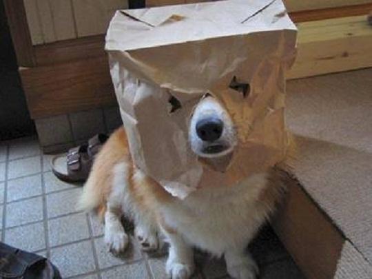 funny pet photo