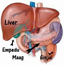 Cara Cepat Mengobati Penyakit Liver