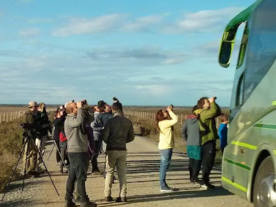 Grupo local SEO-Sevilla, Recibimiento a los Ánsares 2015.