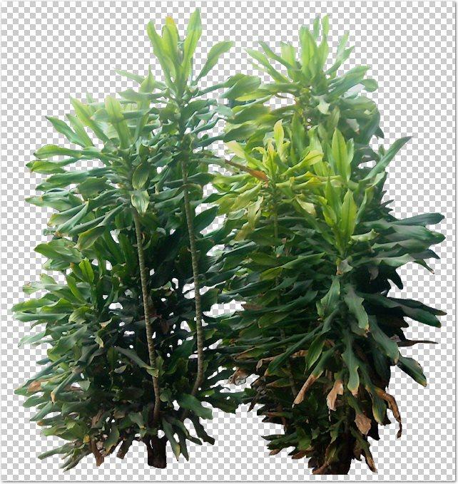 Recursos chele guada 67 arbustos y plantas de jardin en for Arbustos de jardin fotos
