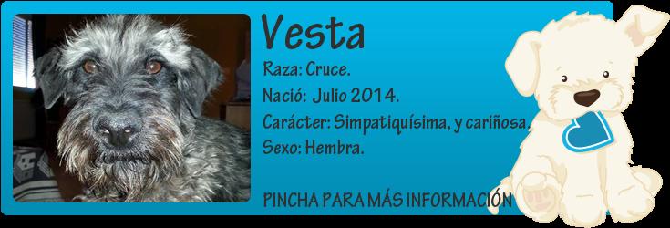 http://mirada-animal-toledo.blogspot.com.es/2014/07/vesta-todo-un-ejemplo-de-superacion.html