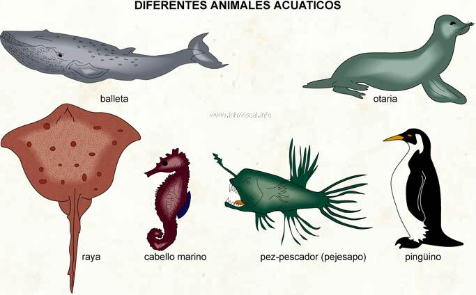 Los Animales: Animales Aero–Terrestres - imagenes de animales terrestres acuaticos y aereos