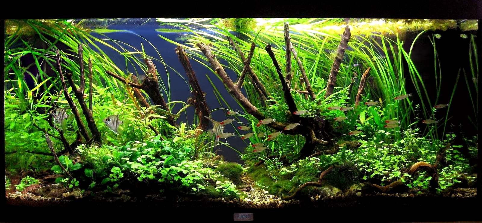 Aqua experience rio180 as tank of the month june 2011 for Site aquarium