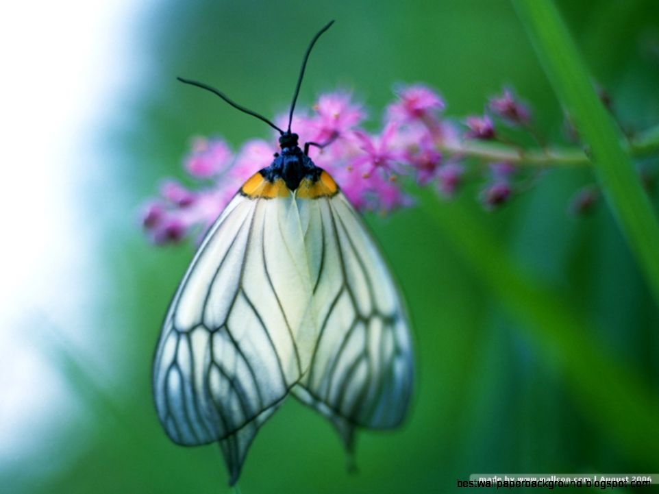 Wallpaper Of Butterflies