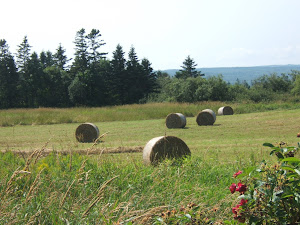 [ kings county hay bales .. scotts bay ]