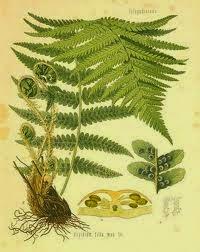 klasifikasi tumbuhan paku, jenis jenis tumbuhan paku, contoh tumbuhan paku, manfaat tumbuhan paku, gambar tumbuhan paku, ciri-ciri tumbuhan paku, reproduksi tumbuhan paku, macam macam tumbuhan paku