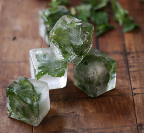 ... To: Mint Infused Ice Cubes | 17 Apart: How To: Mint Infused Ice Cubes