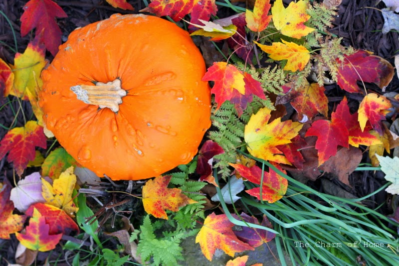 Fall Color: The Charm of Home