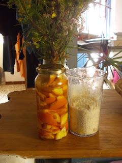 permacultura en españa