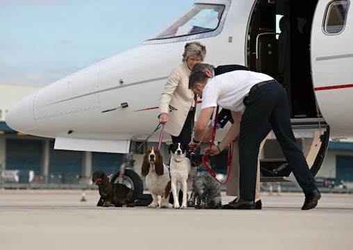 Spend Like A King Furs Class  Private Jet Service For Pets And Dogs